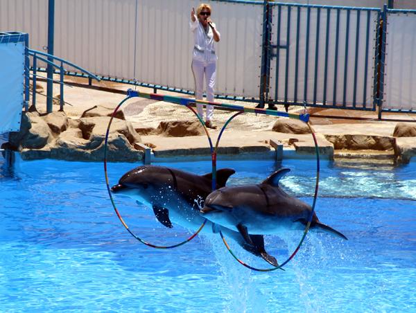 Дельфинарий в Хургаде