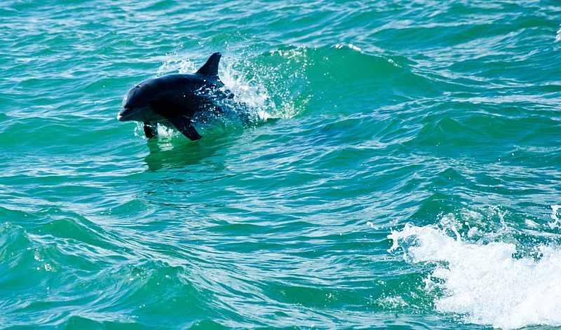 Дельфин в отеле PALM BEACH RESORT