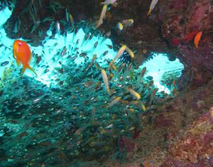 Риф Карлесс является интереснейшей отмелью с коралловыми башнями, диаметр достигает 30 метров