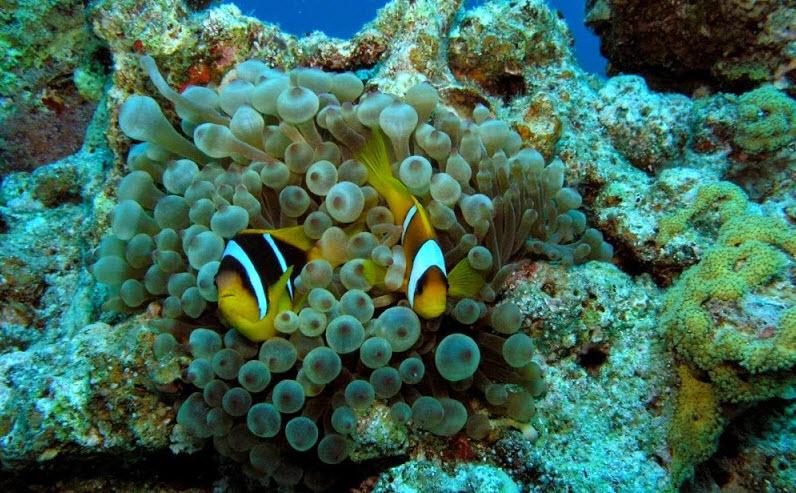 Фанадир риф