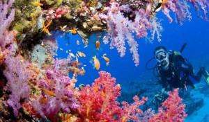 Флора и фауна Красного моря в Египте