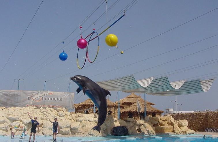 Дельфинарий в Египте