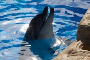 Египетские дельфинарии