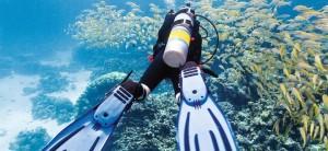 Карлес риф