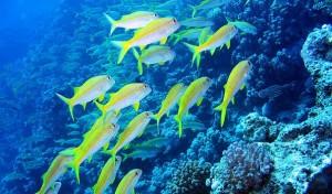Коралловые рифы. Райский остров Хургада.