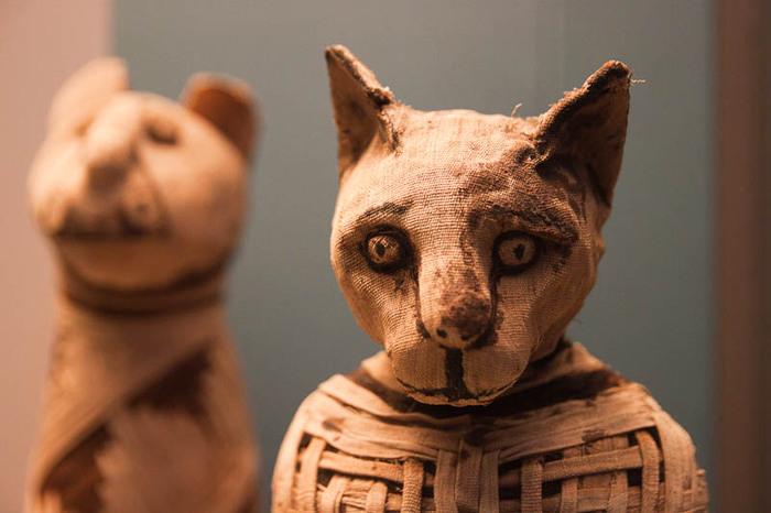 Музей мумификации