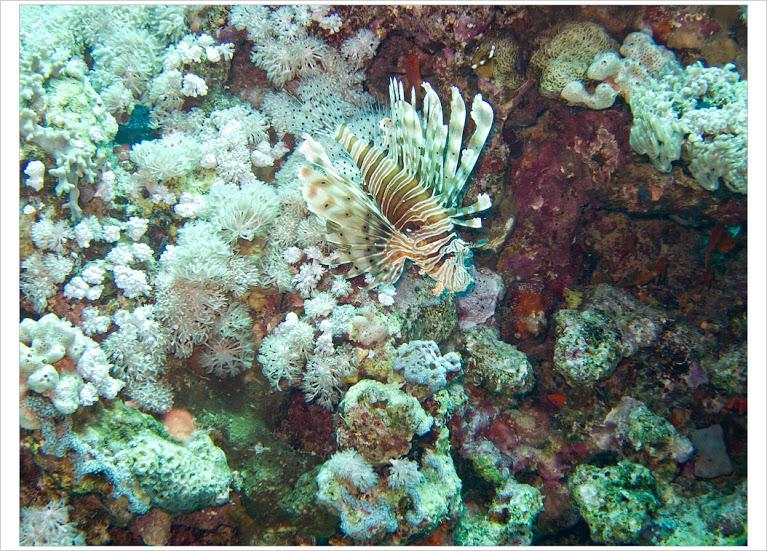 Подводные красоты