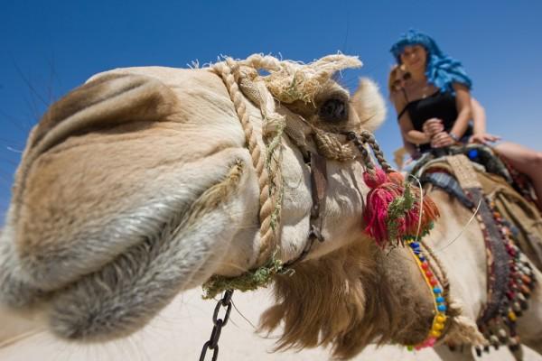 Египет экскурсии