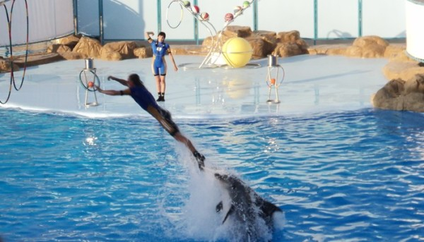 Dolphin World Egypt