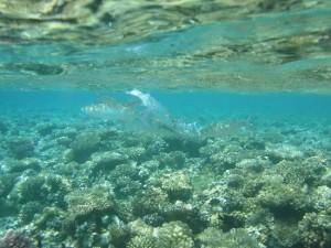 Makadi Bay, Egypt